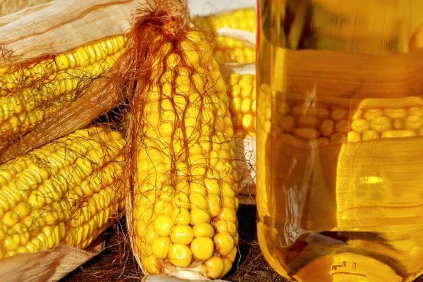 Желтая кукуруза