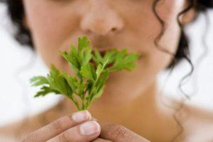 Польза и вред петрушки при беременности на ранних и поздних сроках, в каких случаях запрещено употреблять зелень