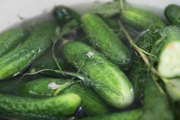 огурцы с зеленью в кастрюле