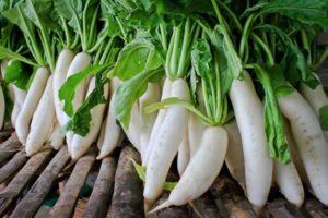 Лучшие сорта редьки дайкон для зимнего хранения и открытого грунта, выбор семян