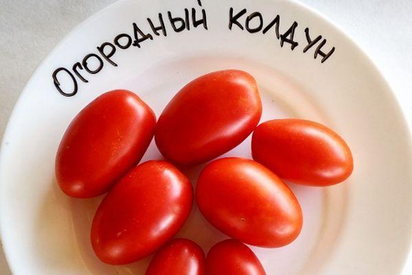 Плоды томата