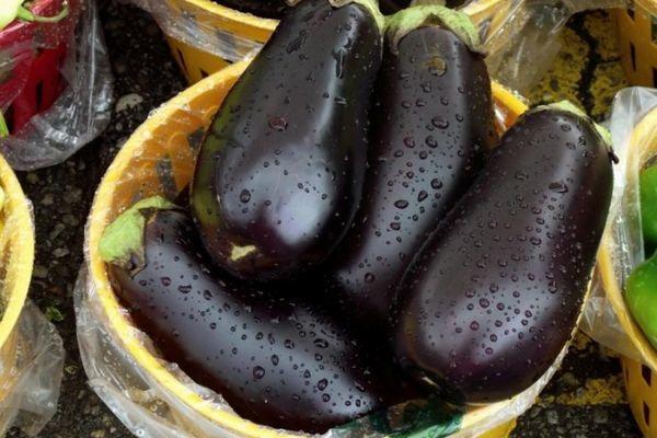 Баклажан — овощ