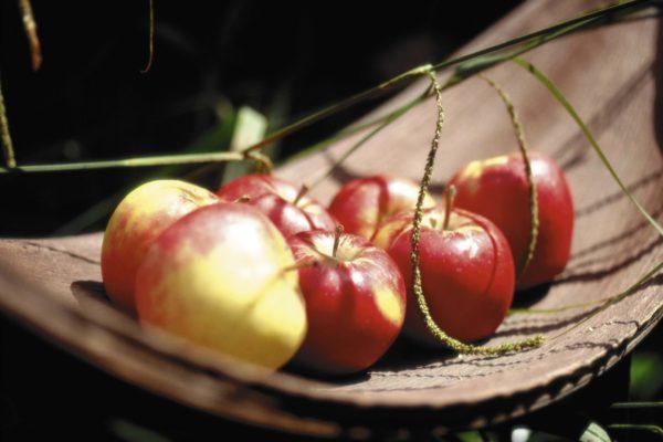ранетки яблоки