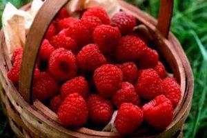 Простые рецепты желе из малины с варкой и без на зиму, с косточками и «Пятиминутка»