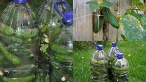 Рецепты соленых огурцов в 5 литровых пластиковых бутылках на зиму