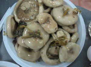 Простые рецепты как на зиму солить грибы горячим и холодным способом в домашних условиях