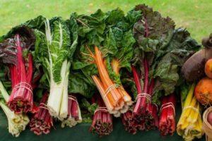 Лучшие рецепты приготовления листовой свеклы мангольд на зиму и хранение заготовки