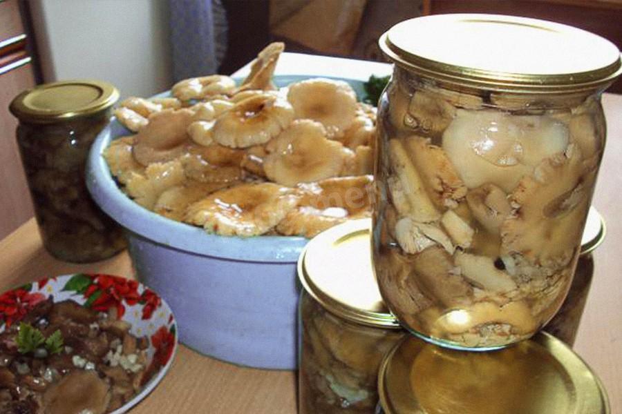 соленные грибы