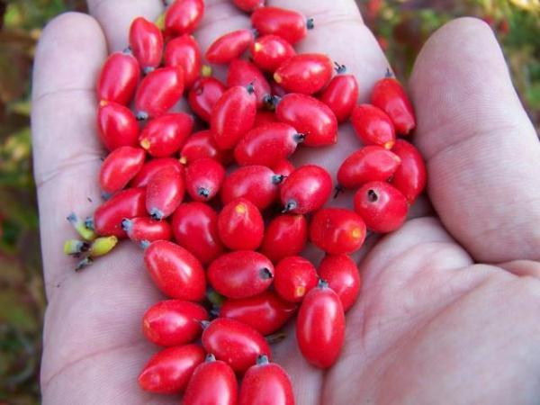ягоды кизил