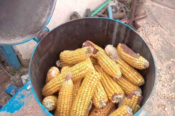 Засушенная кукуруза