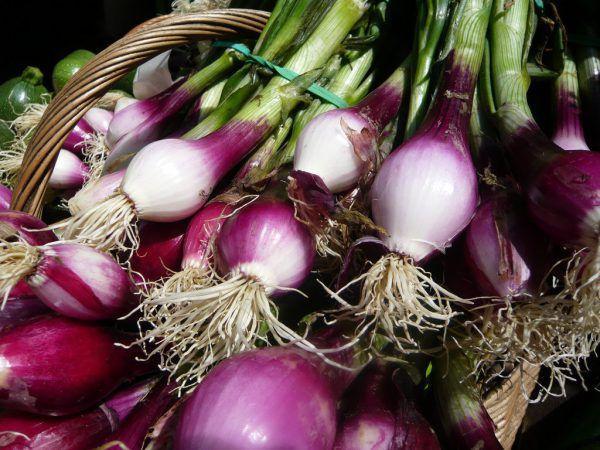 лук салатный