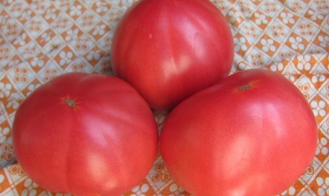 мясистые помидоры