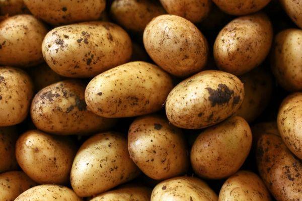 Плоды картошки
