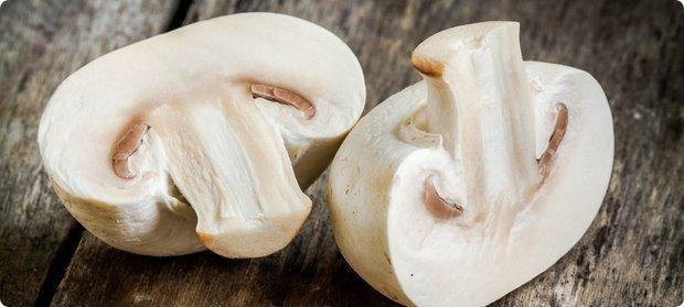 грибы шампиньон