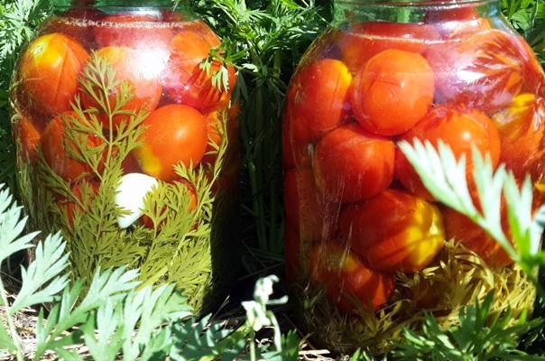 помидоры с морковной ботвой в огороде