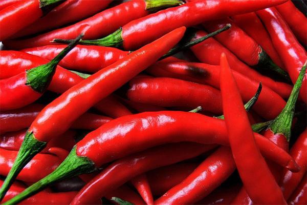 плоды красного острого перца