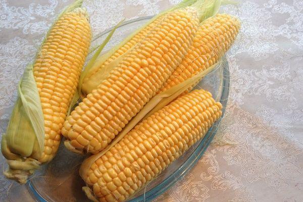 Гибрид кукурузы