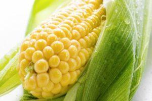 Описание и характеристики самых урожайных сортов и гибридов кукурузы