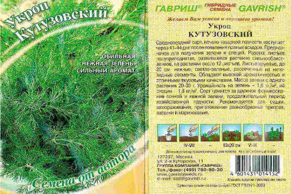 укроп Кутузовский