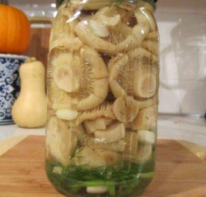 Лучшие рецепты приготовления соленых сыроежек холодным и горячим способом на зиму в домашних условиях