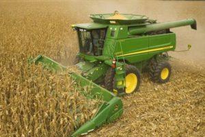 Правила уборки урожая кукурузы с полей для разных целей: на зерно, для попкорна и на силос