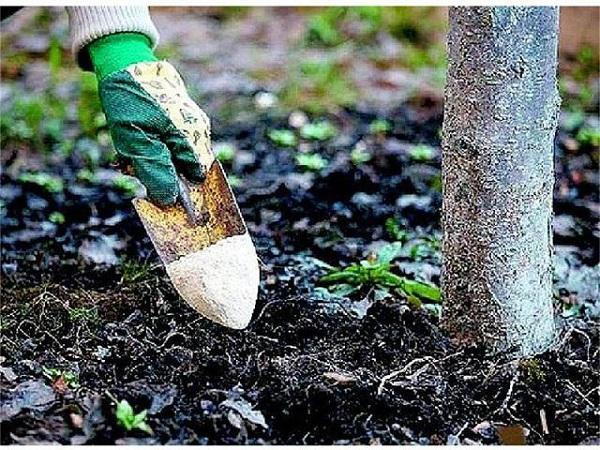 удобрение фруктового дерева