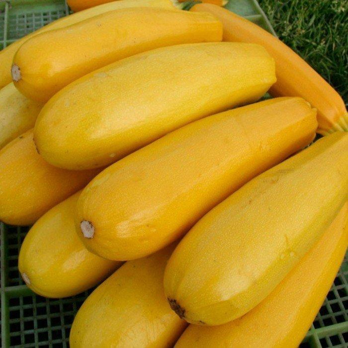 желтый кабачек