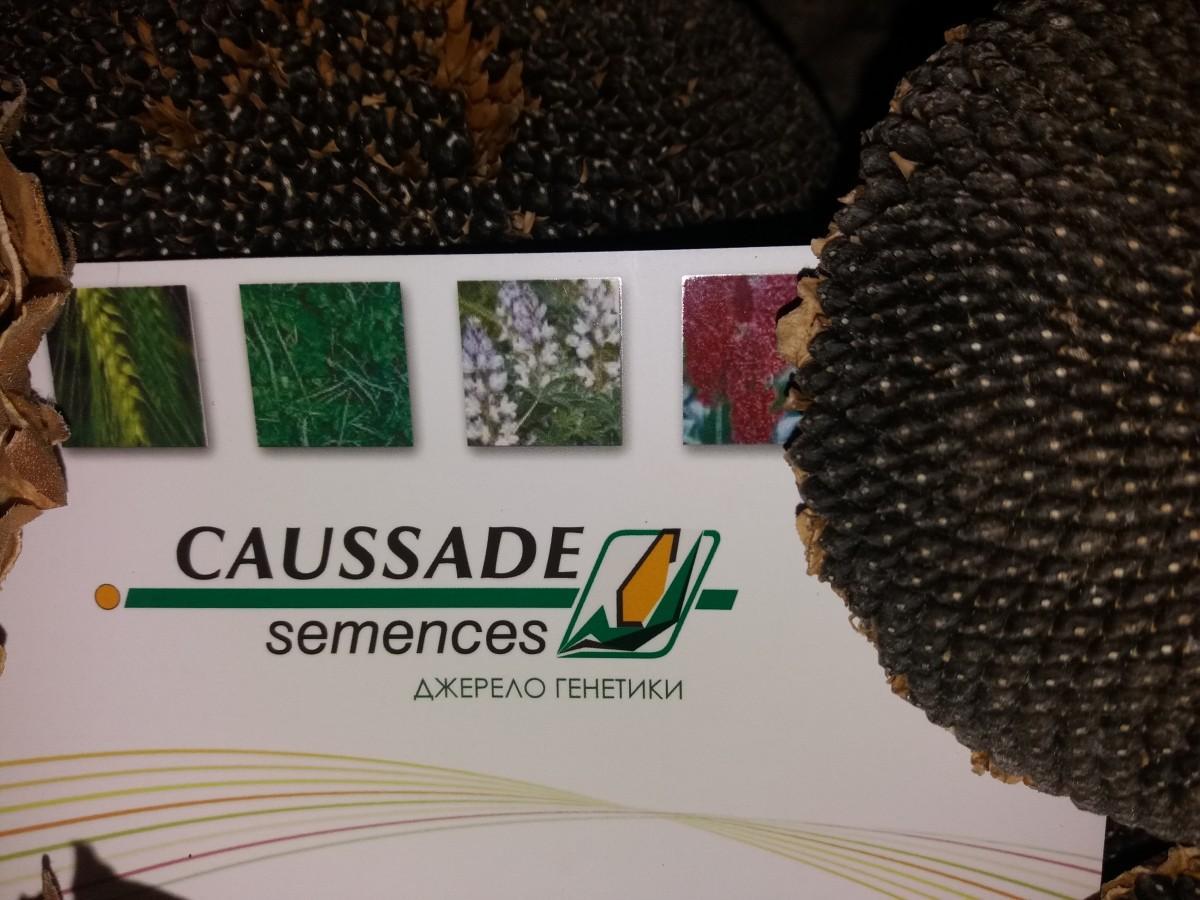 Caussade semences - производитель семян