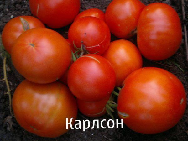 томат Карлсон