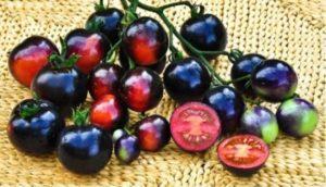 Описание лучших сортов черных помидоров для открытого грунта и теплиц