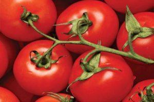 Описание лучших ультраскороспелых сортов томатов для открытого грунта и теплицы