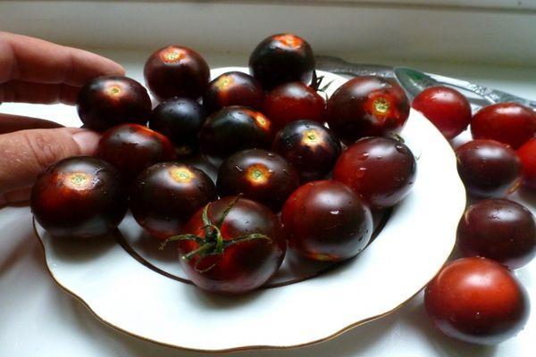 томаты Черный Черри