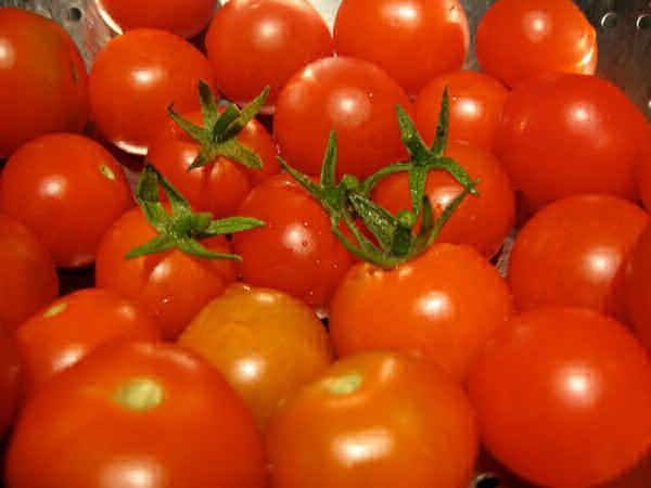 урожай томата анюта