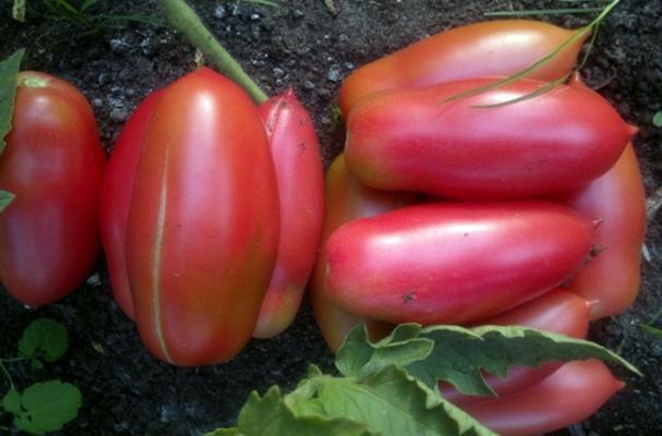 томат перцевидный длинный минусинский