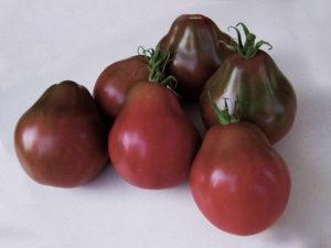 Характеристика и описание томата сорта Японский трюфель, выращивание