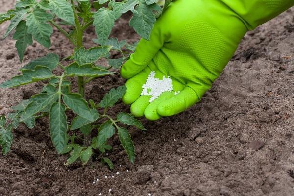 удобрение рассады томата