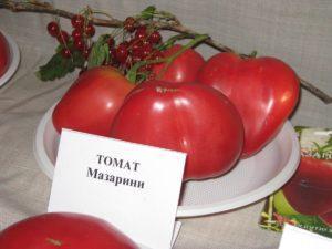 Описание и характеристики сорта томатов Мазарини, урожайность и выращивание