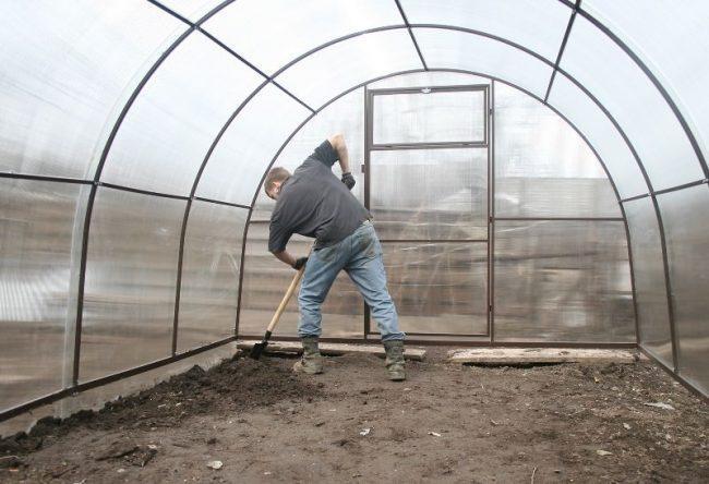 Выращивание помидоров в теплице из поликарбоната