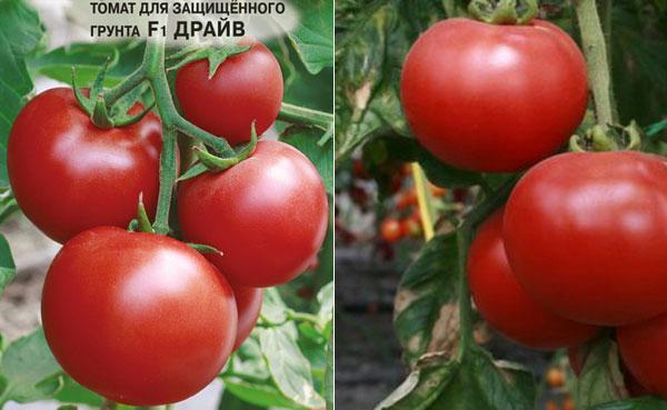 Хлыновский томат