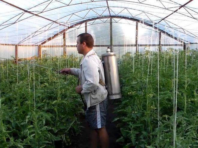 борная кислота для помидоров опрыскивание