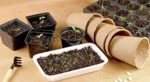 Посадочные благоприятные дни для томатов в марте 2019, когда лучше сеять
