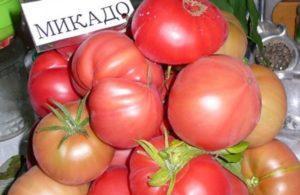 Описание и характеристики сорта томатов Микадо, урожайность и выращивание