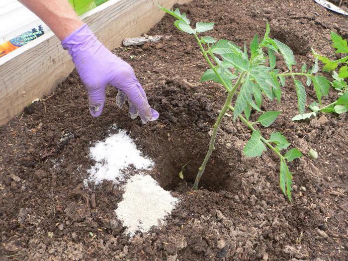 фосфорно-калийные и азотные подкормки.