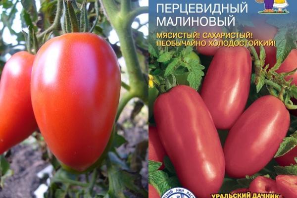 томат перцевидный малиновый