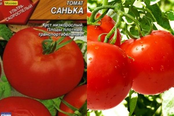 семена томата санька