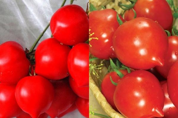внешний вид томата тарасенко