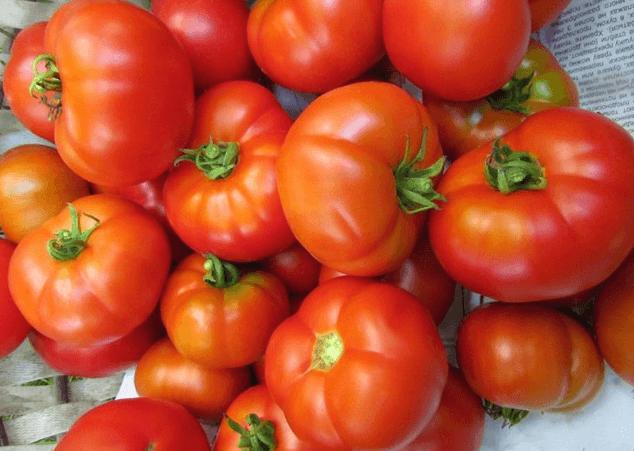 томат Кубанец