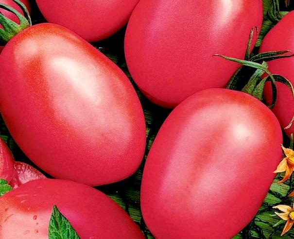 томат де барао