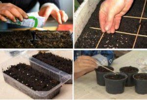 Когда лучше сажать помидоры на рассаду в 2019 году и сроки посева семян