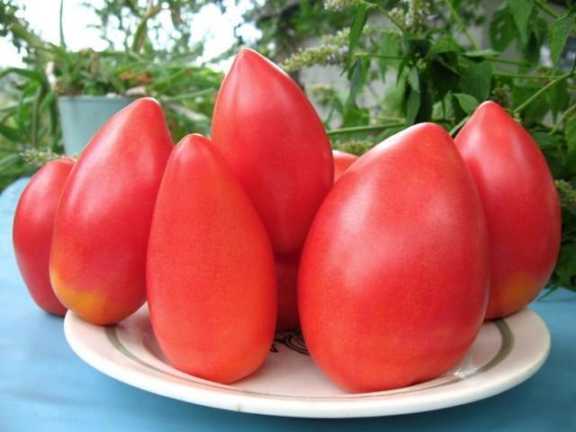 томат Супермодель